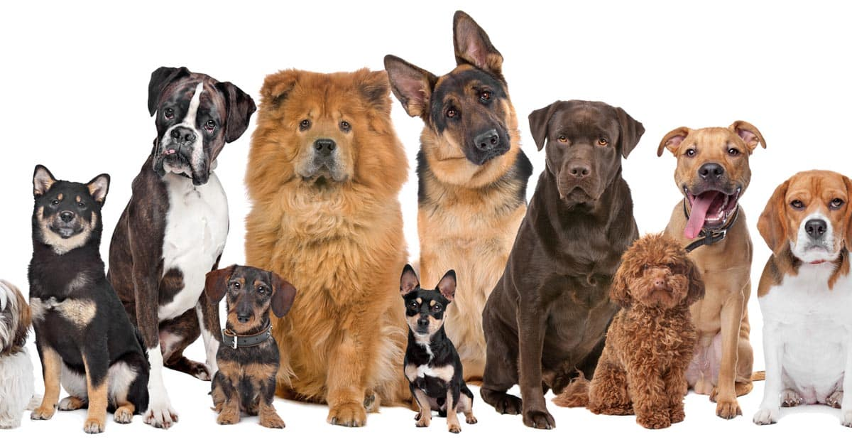 ده نژاد سگ