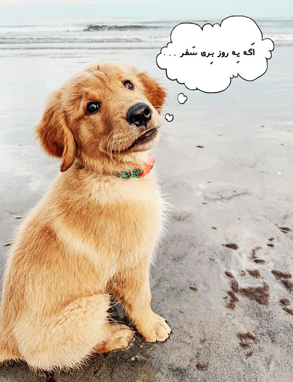 هزینه بردن سگ به ترکیه