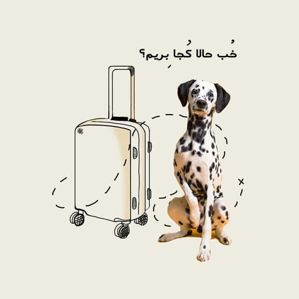 شرایط بردن سگ به ترکیه