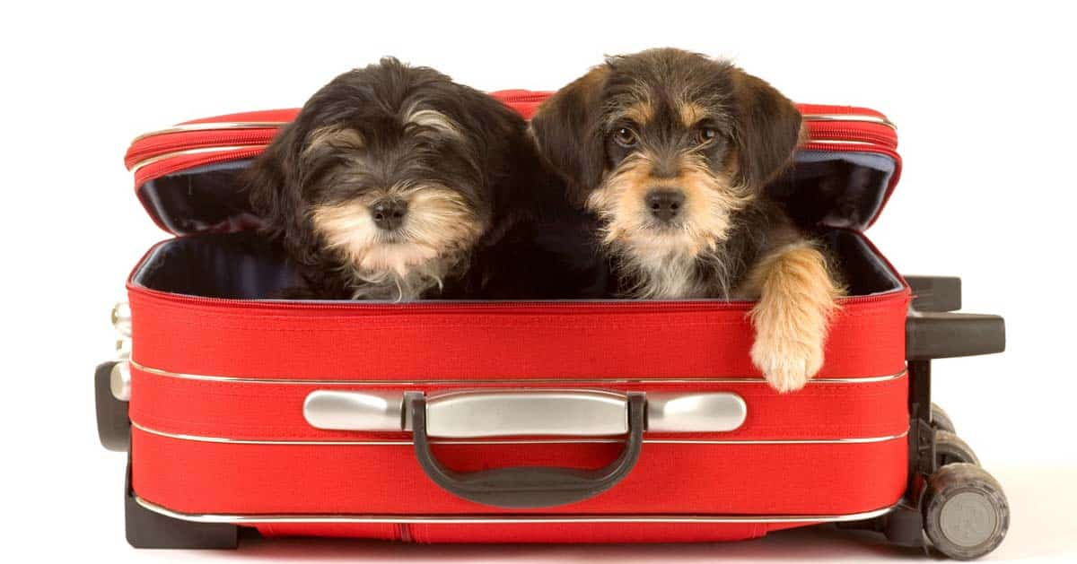 بردن سگ به استرالیا