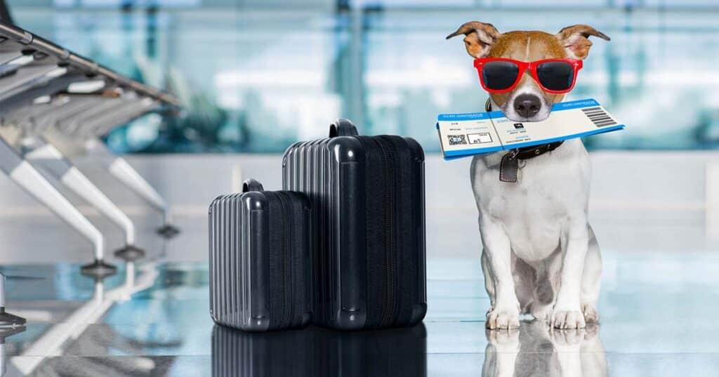 نکات مهم برای بردن سگ به ترکیه + شرایط بردن سگ به ترکیه | آپ کارگو