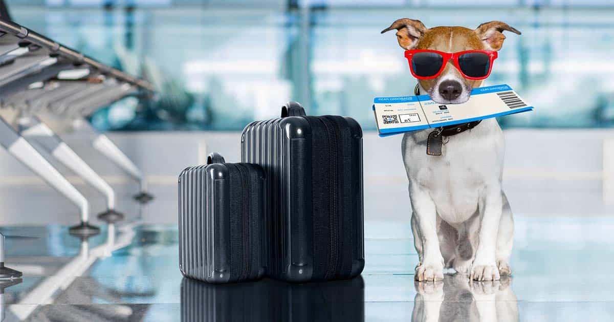بردن سگ به ترکیه