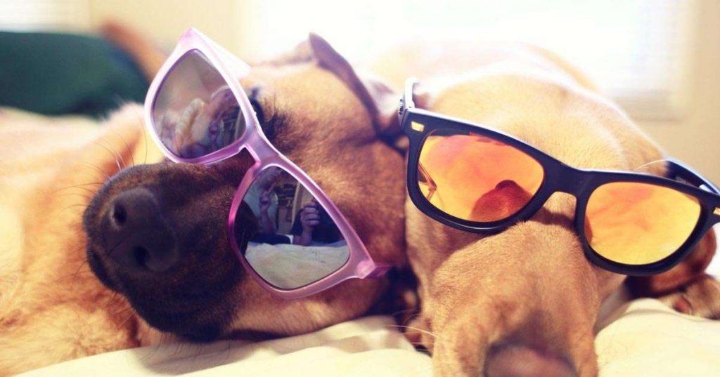 لیزرتراپی سگ و گربه