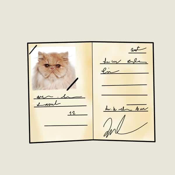 شناسنامه گربه و نحوه گرفتن آن