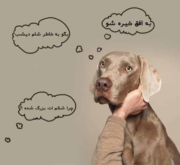 زایمان سگ