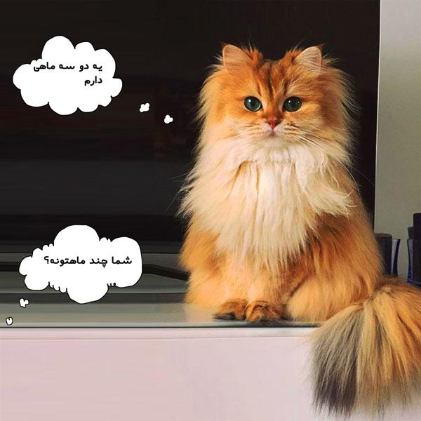سن مناسب عقیم سازی گربه و هزینه آن