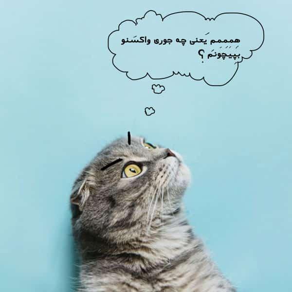 واکسن گربه و هزینه واکسن سه گانه
