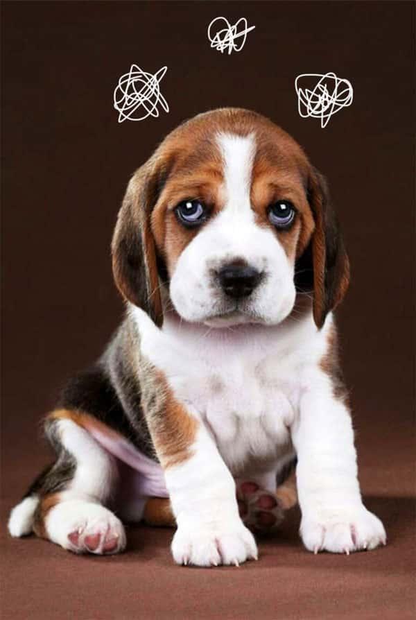 عقیم سازی سگ ماده و هزینه های آن