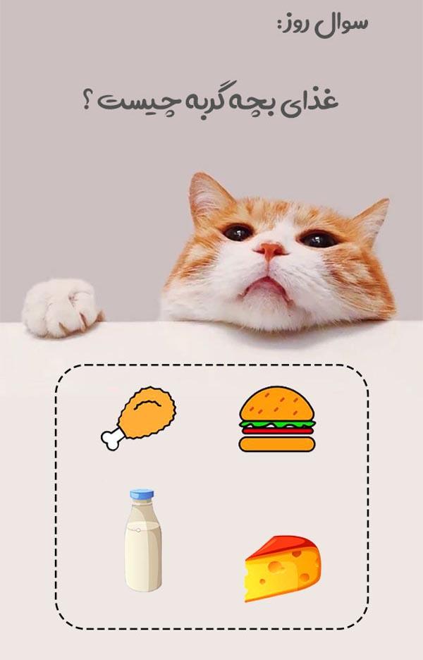 تغذیه بچه گربه