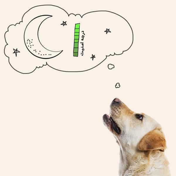 مراحل زایمان سگ