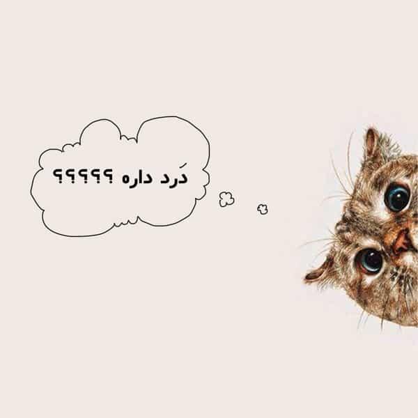 واکسن گربه و عوارض آن
