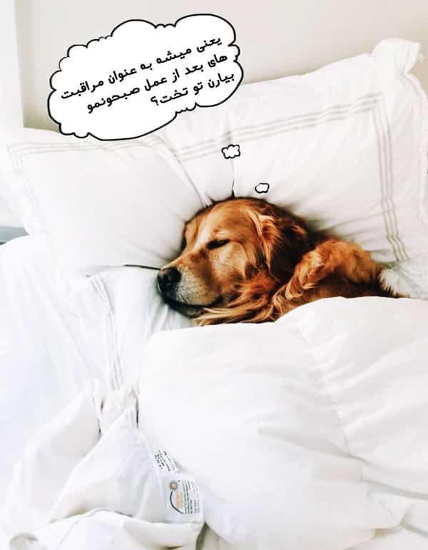 هزینه عقیم سازی سگ