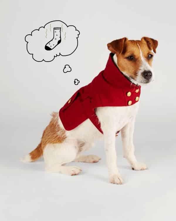 علت اسهال سگ و درمان