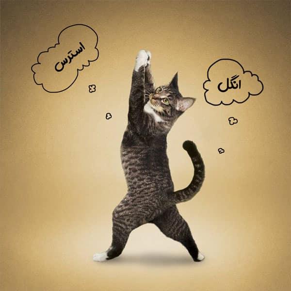 اسهال گربه و درمان