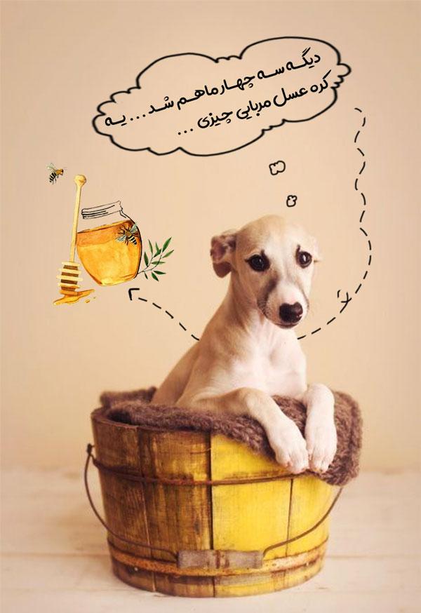 غذای توله سگ دو ماه