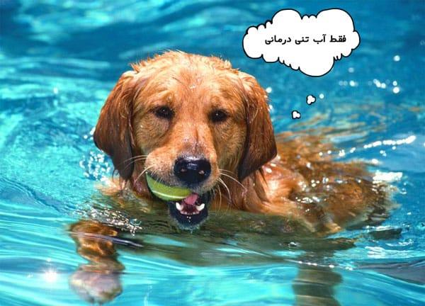 آب درمانی سگ
