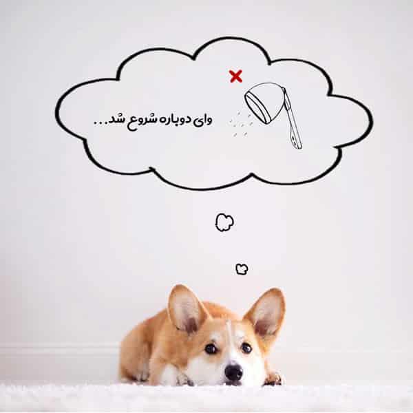 هزینه اصلاح موی سگ