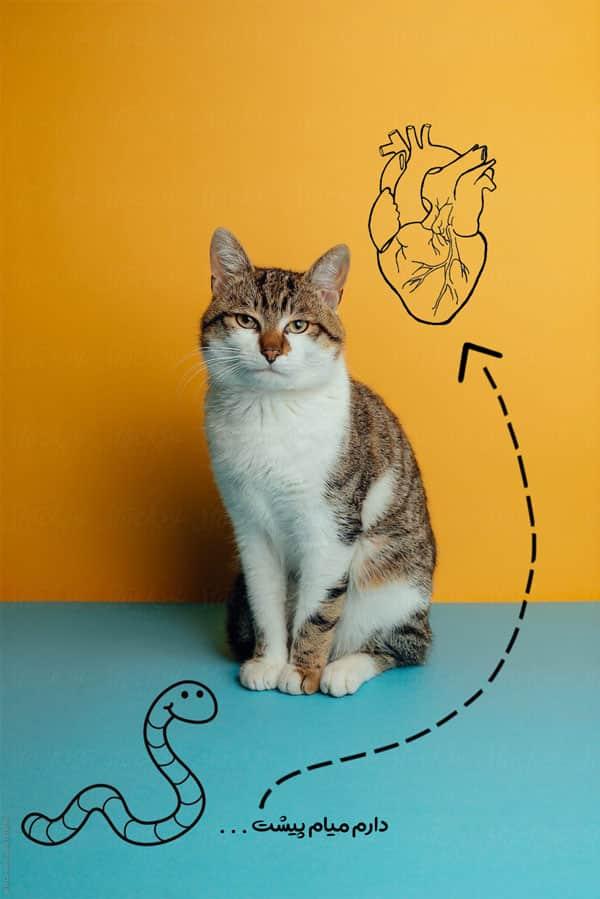 درمان اسهال گربهها