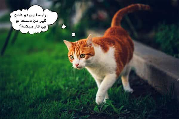 پت شاپ تهران و لوازم ضروری گربه