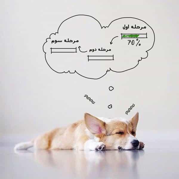 زایمان سگ و مراحل آن
