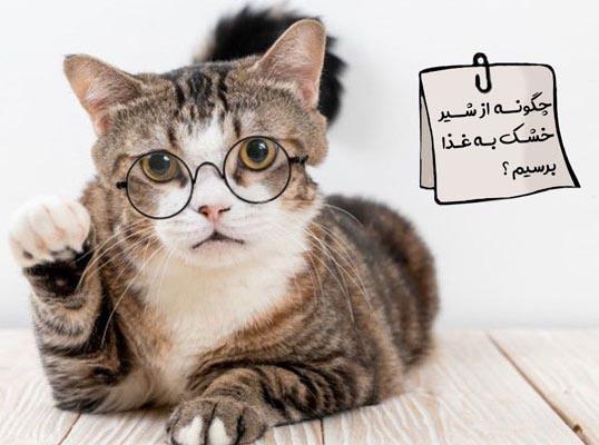 تغذیه بچه گربه دو ماه