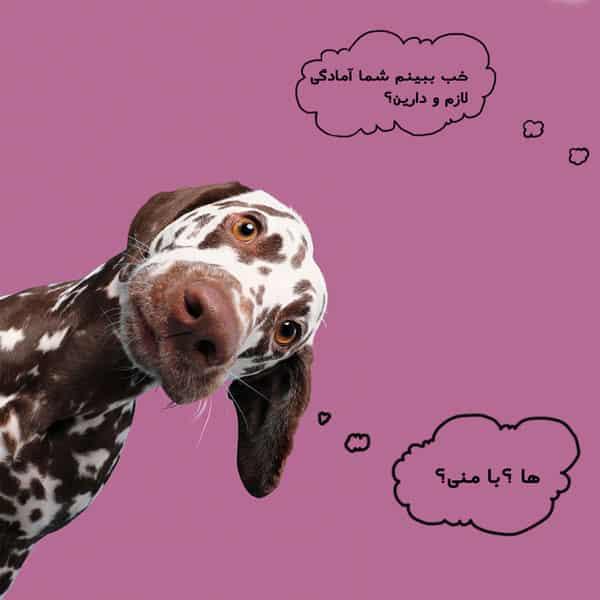 قیمت عقیم سازی سگ