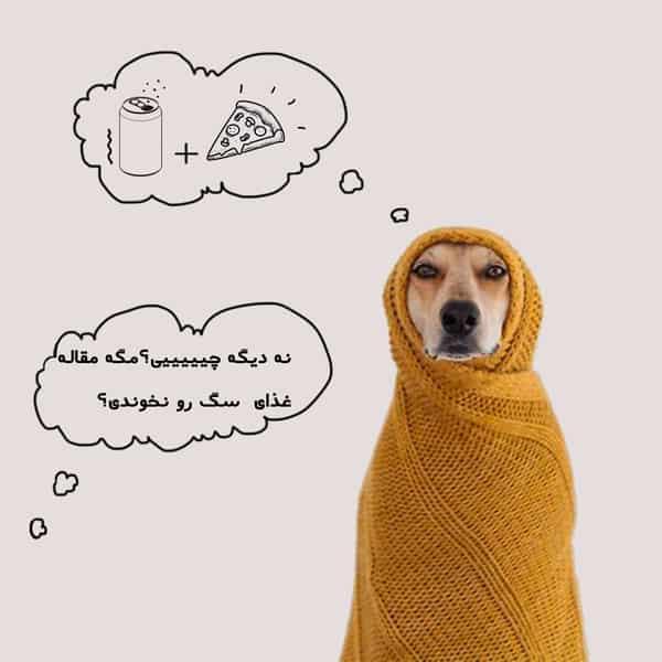 زایمان سگ و تغذیه سگ باردار