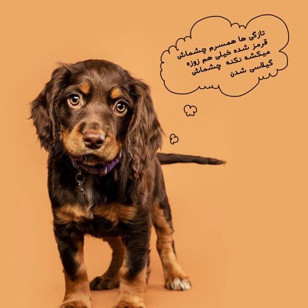 چشم گیلاسی در سگ و نشانه های آن