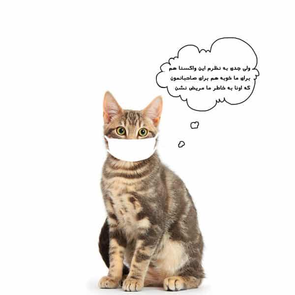 واکسن گربه و قیمت واکسن های چندگانه گربه