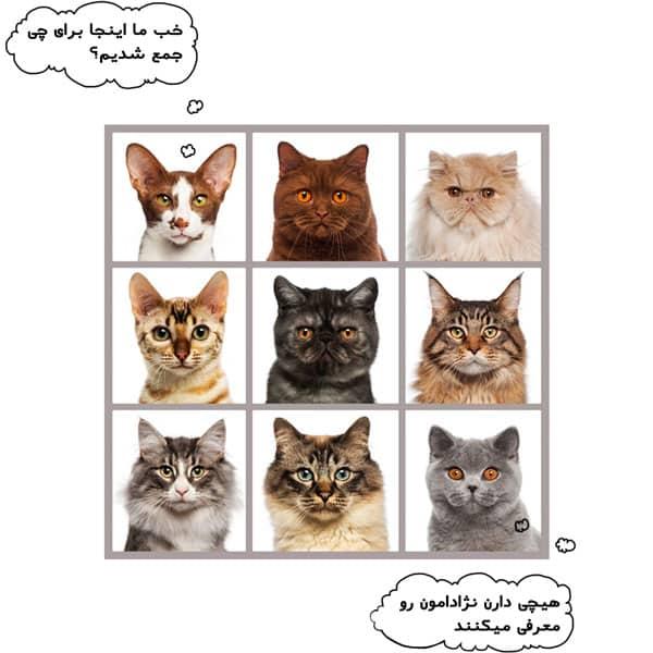 دامپزشک گربه