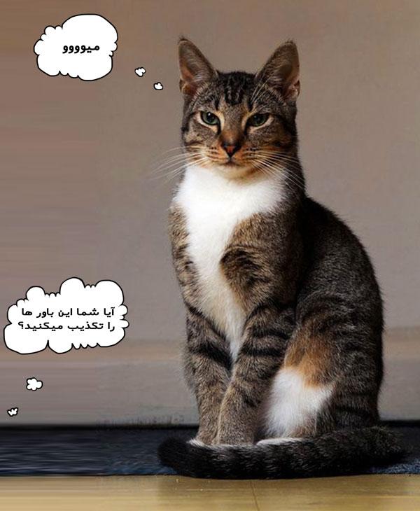 مزایا و معایب عقیم سازی گربه