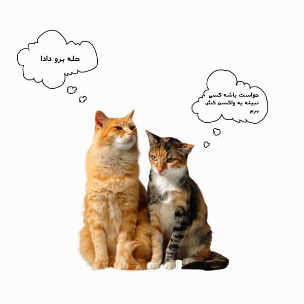 واکسیناسیون گربه و هزینه آن