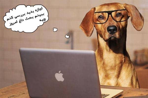 عقیم سازی سگ ماده و عوارض آن