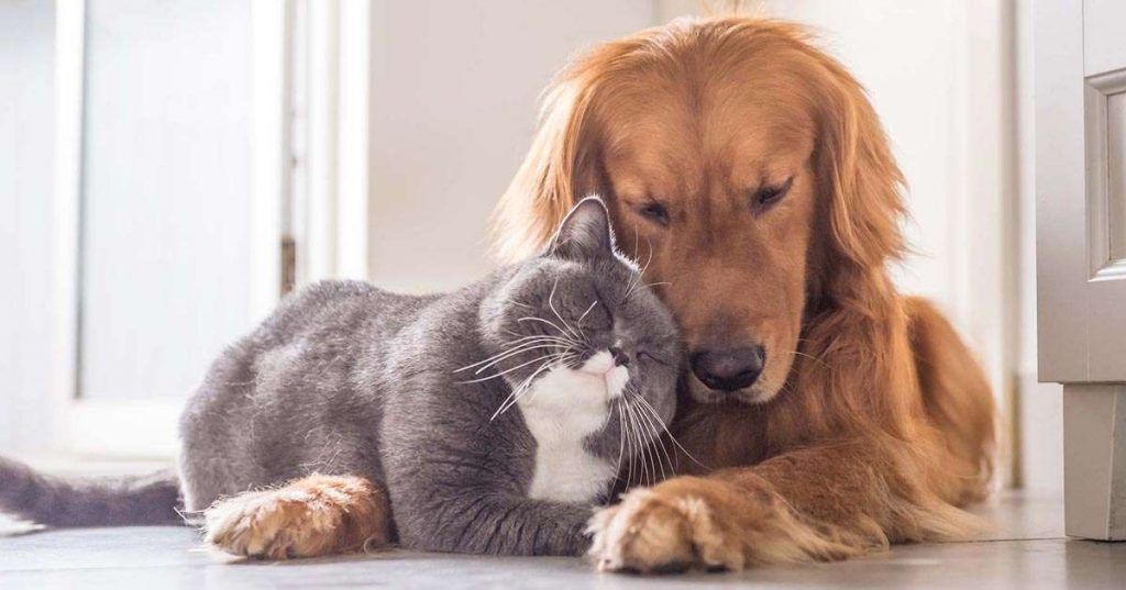 صدور گواهی سلامت حیوانات خانگی