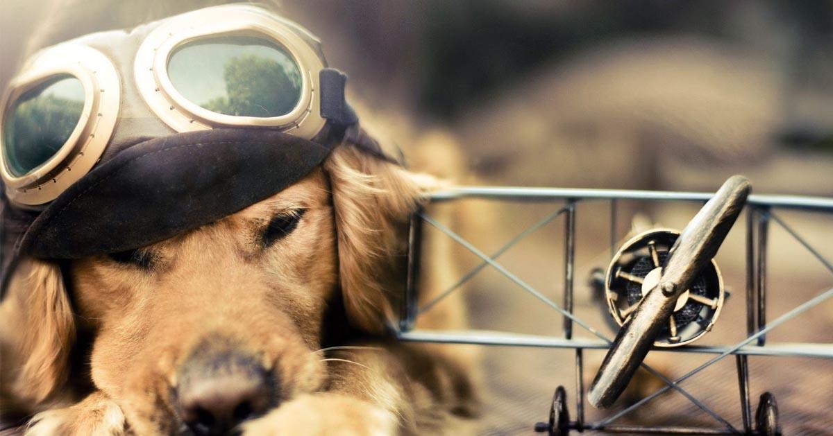 شناسنامه سگ و نحوه گرفتن آن