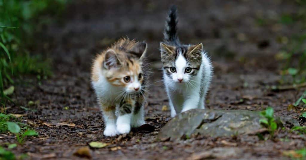 شناسنامه گربه