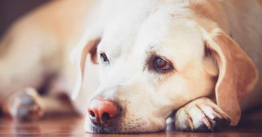 اسهال سگ و درمان