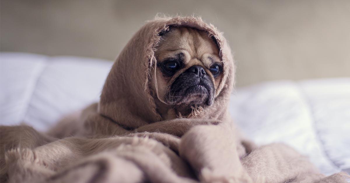 درمان دیسپلازی لگن سگ