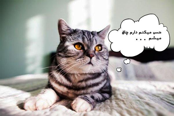 زایمان گربه و مدت زمان آن