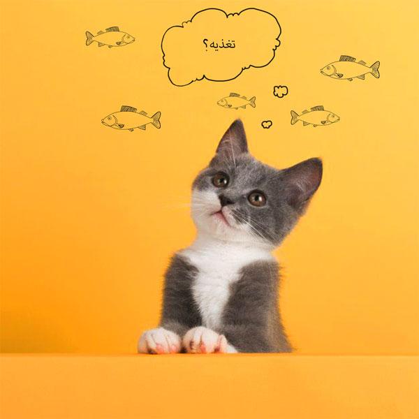 زایمان گربه