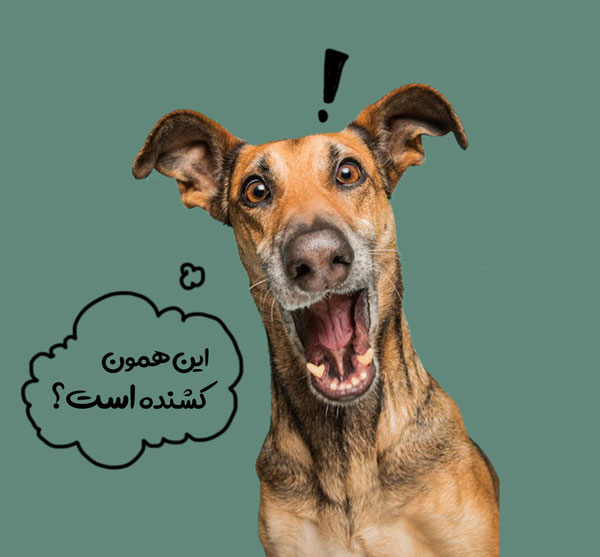 پاروا ویروس سگ
