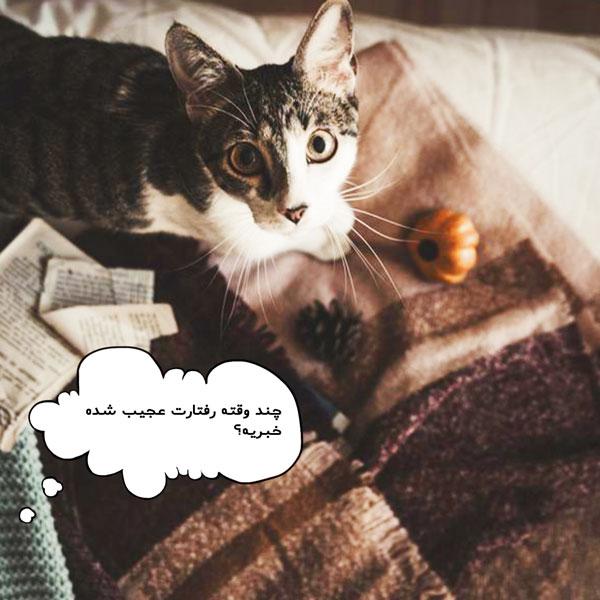 نشانه های زایمان گربه و فصل زایمان گربه