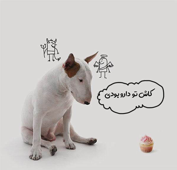 درمان پاروا ویروس سگ