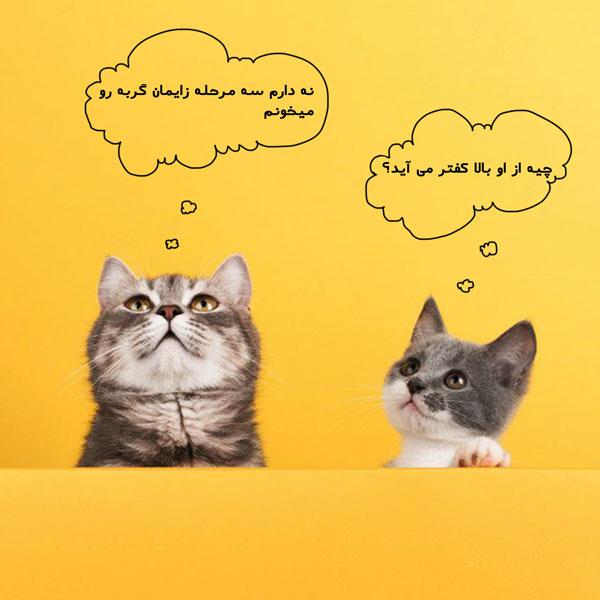 زایمان گربه و مراحل آن