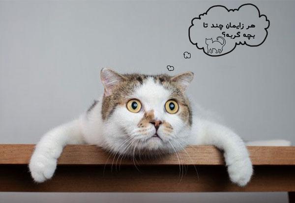 زایمان گربه و تعداد بچه گربه ها در هر زایمان