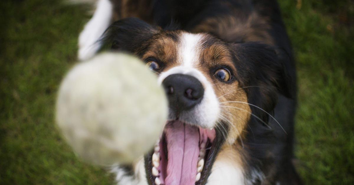 مسواک زدن سگ |