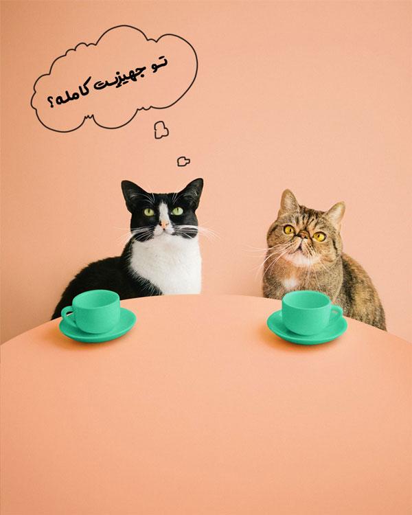 خرید وسایل گربه