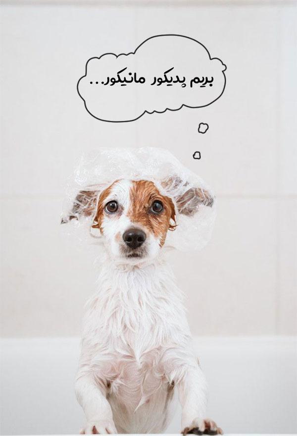 گرفتن ناخن سگ