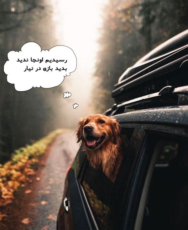 شرایط بردن سگ به استرالیا