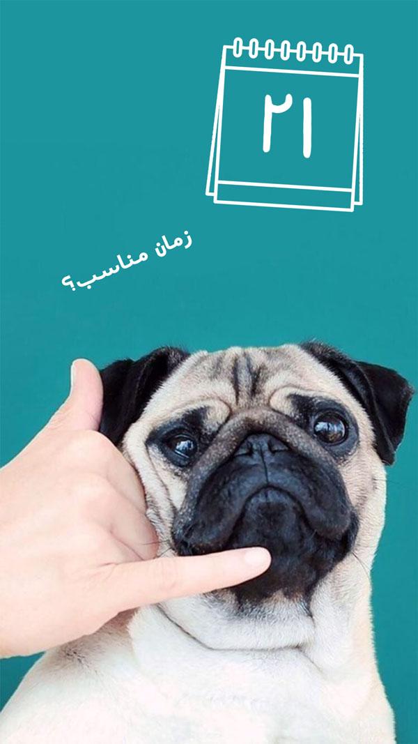 عقیم سازی سگ نر